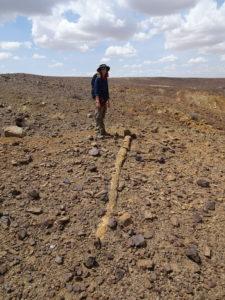 Napudet: Elena Steponaitis near a fossil tree